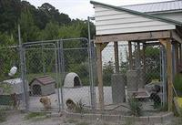 kennel by the cat center